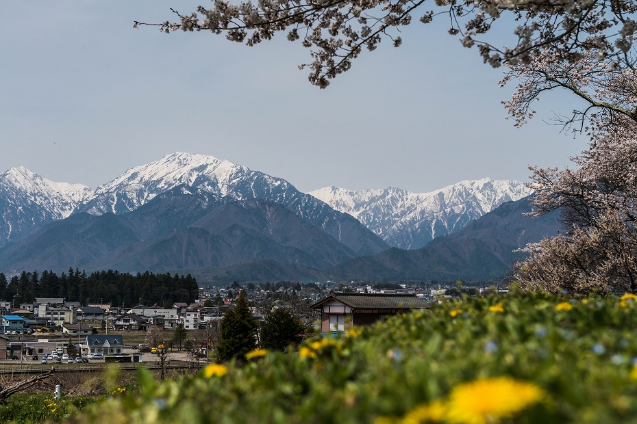 2016.04.16大町観光道路の桜並木3