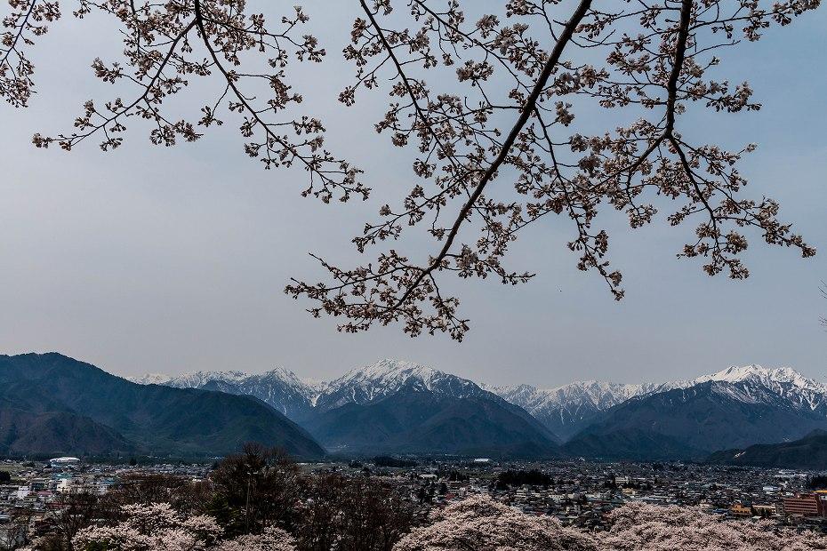 2016.04.16大町公園付近からの桜2