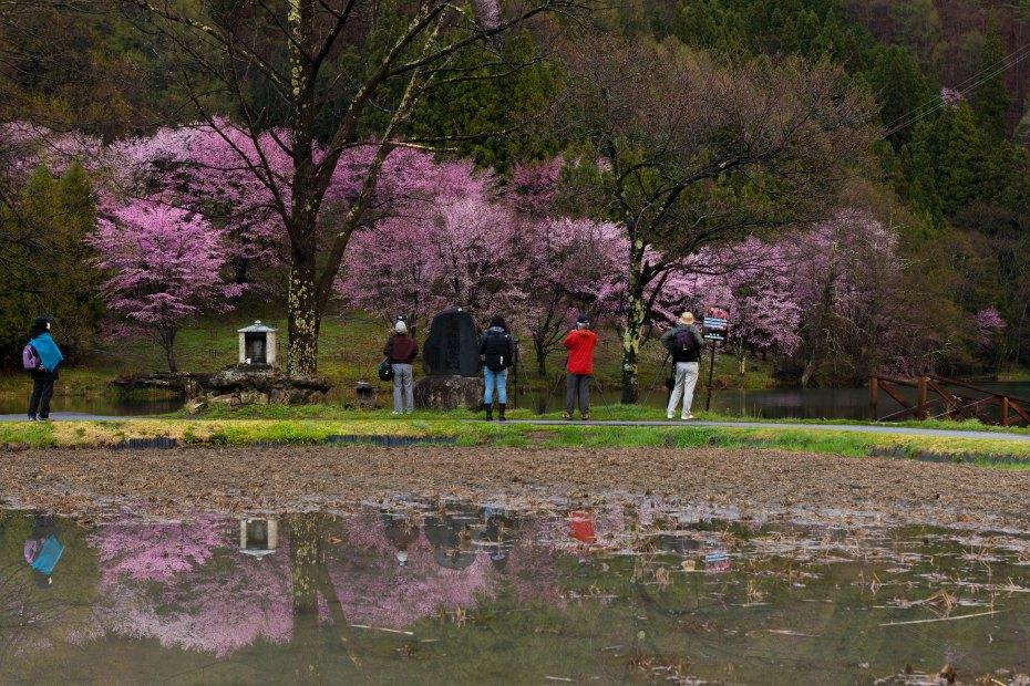 2016.04.22中網湖の桜7