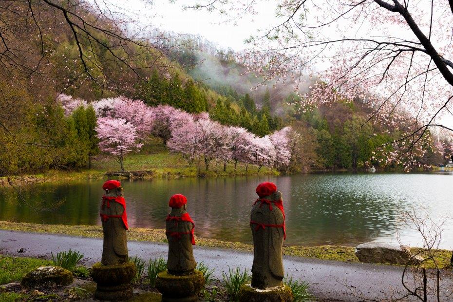 2016.04.22中網湖の桜8