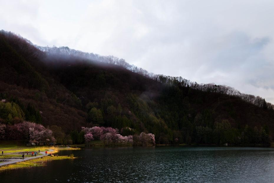 2016.04.22中網湖の桜5