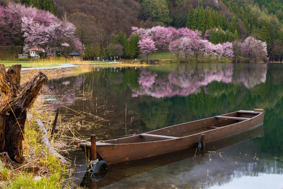 2016.04.22中網湖の桜6