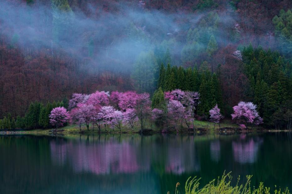 2016.04.22中網湖の桜1