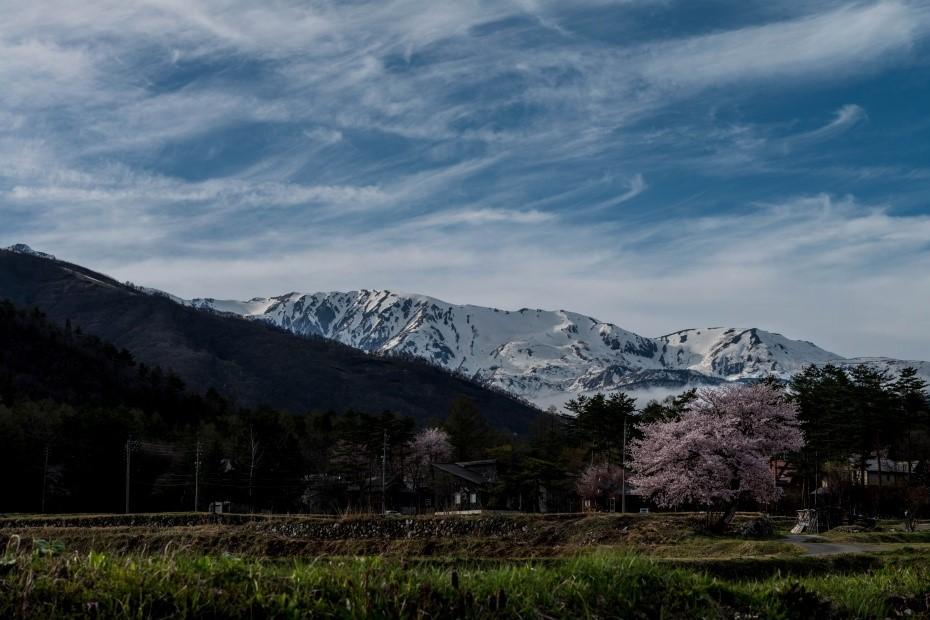2016.04.22HAKUBA47の桜4