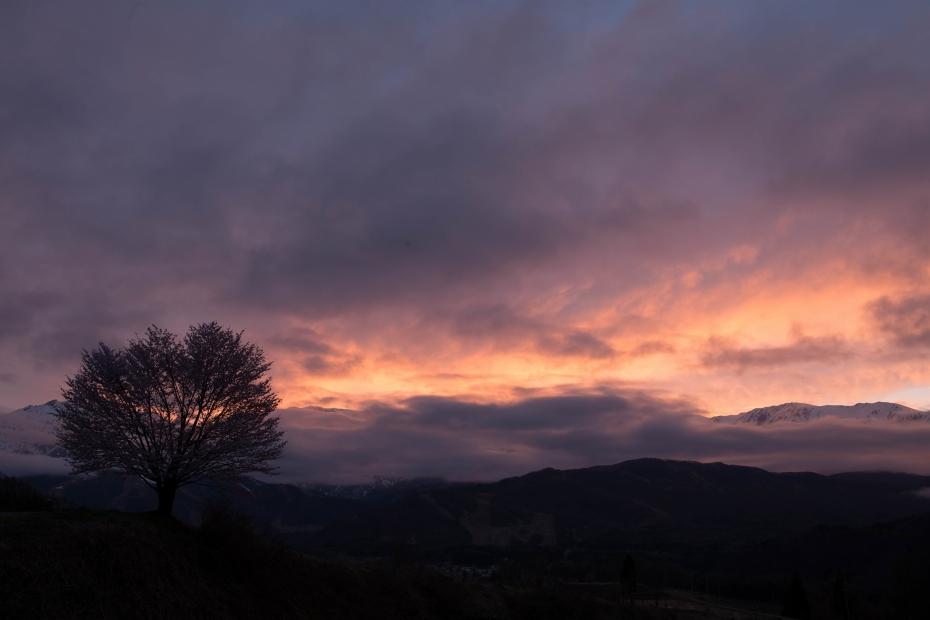 2016.04.22夕焼けの北アルプスと野平の桜5