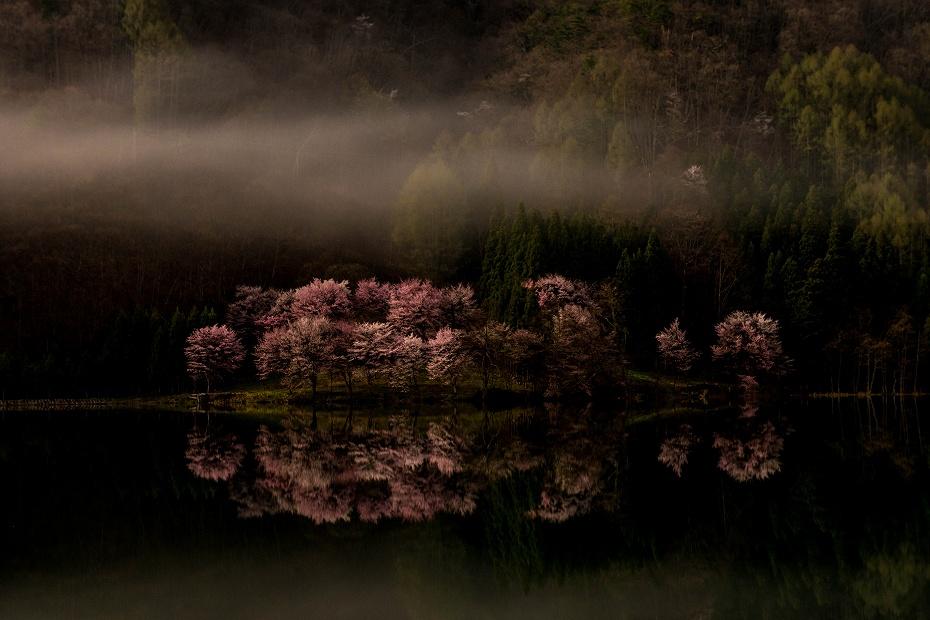 2016.04.23中綱湖のオオヤマザクラ1