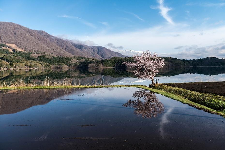 2016.04.23青木湖の一本桜3