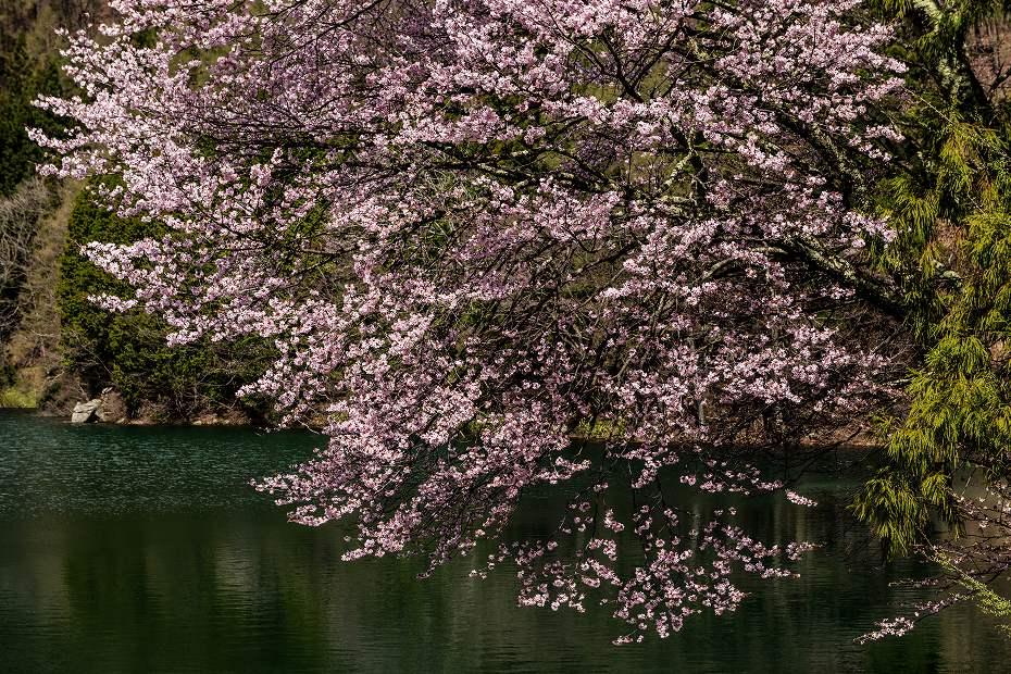 16.2016.04.22中綱湖2