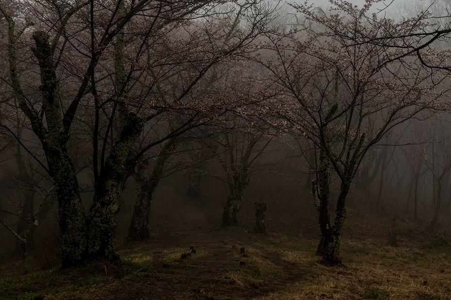 3.2016.04.14光城山