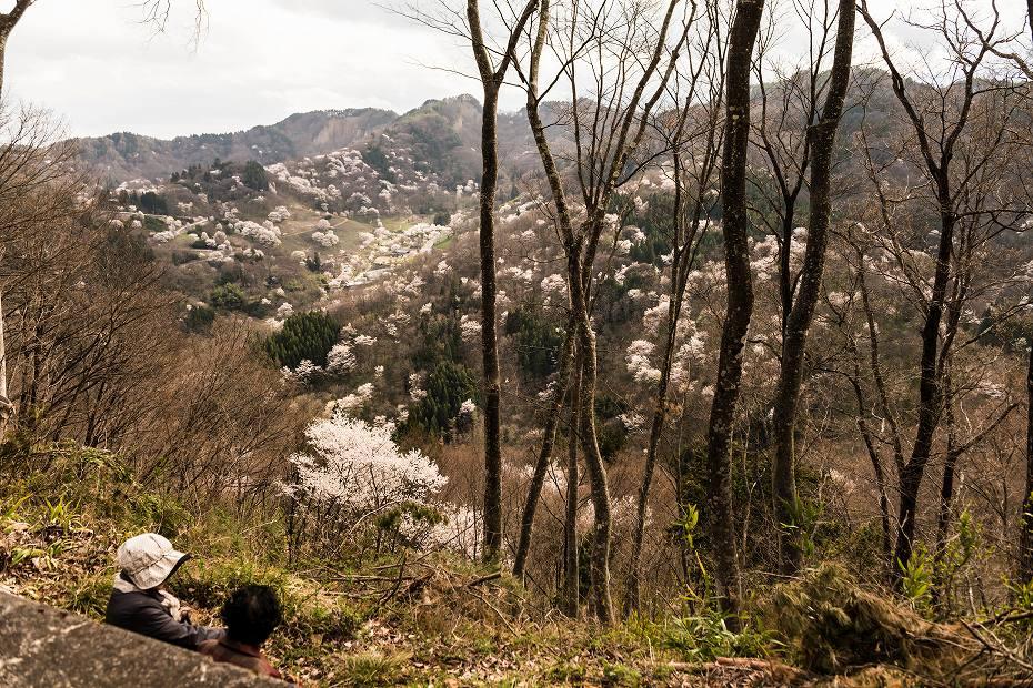 1.2016.04.13桜仙峡