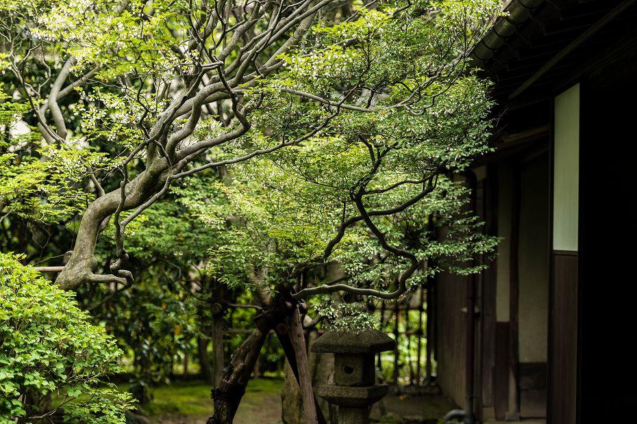 2016.05.03寺島蔵人邸跡ドウダンツツジ1