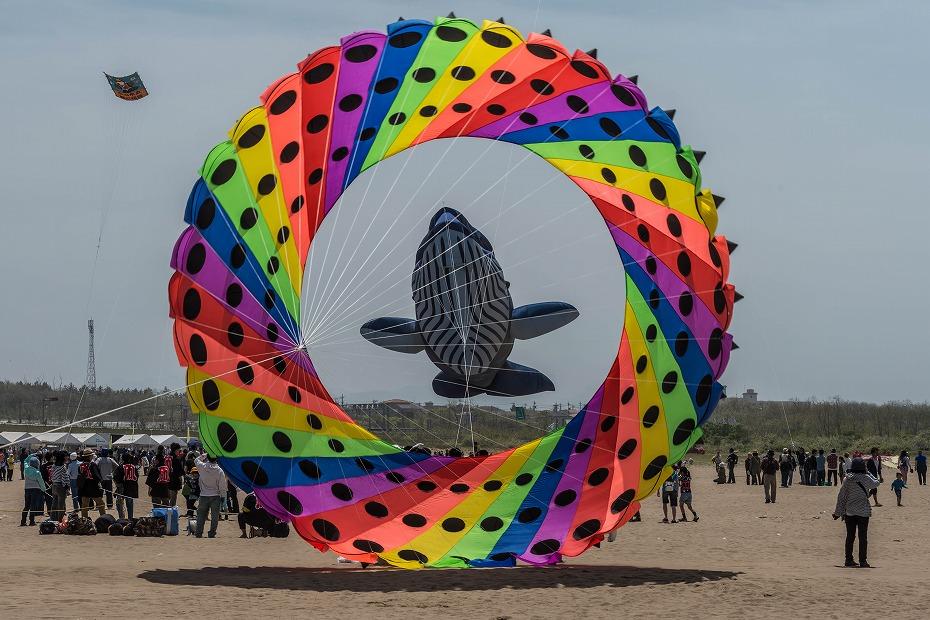 2016.05.08世界の凧の祭典1