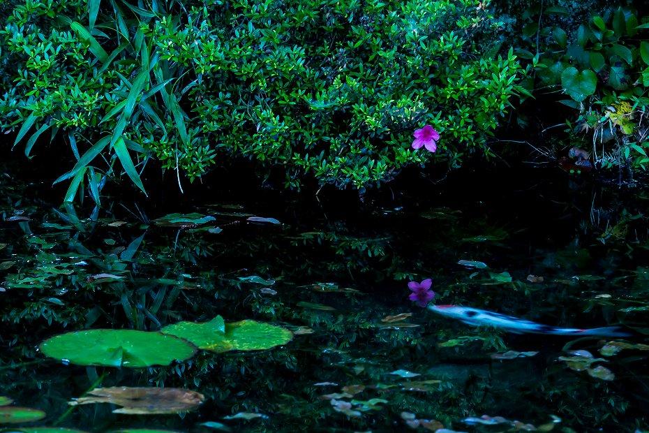 2016.05.29モネの池9