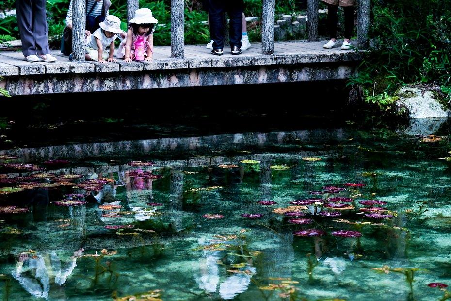 2016.05.28モネの池10