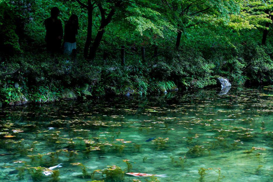 2016.05.28モネの池8