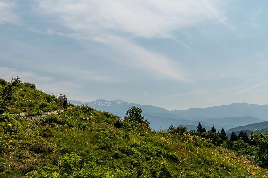 2016.06.06白山とニッコウキスゲ11