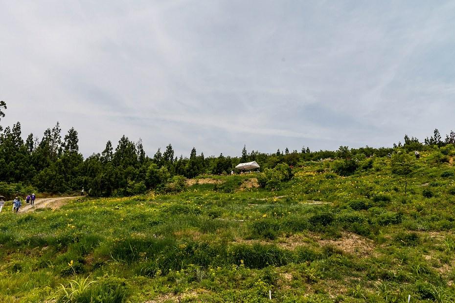 2016.06.06白山とニッコウキスゲ12