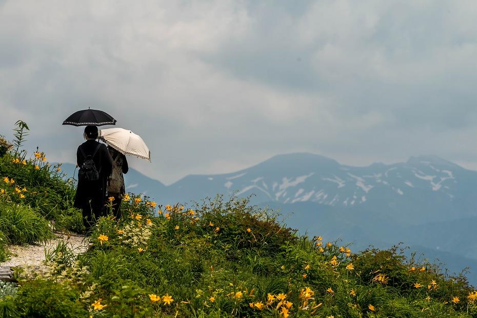2016.06.06白山とニッコウキスゲ9