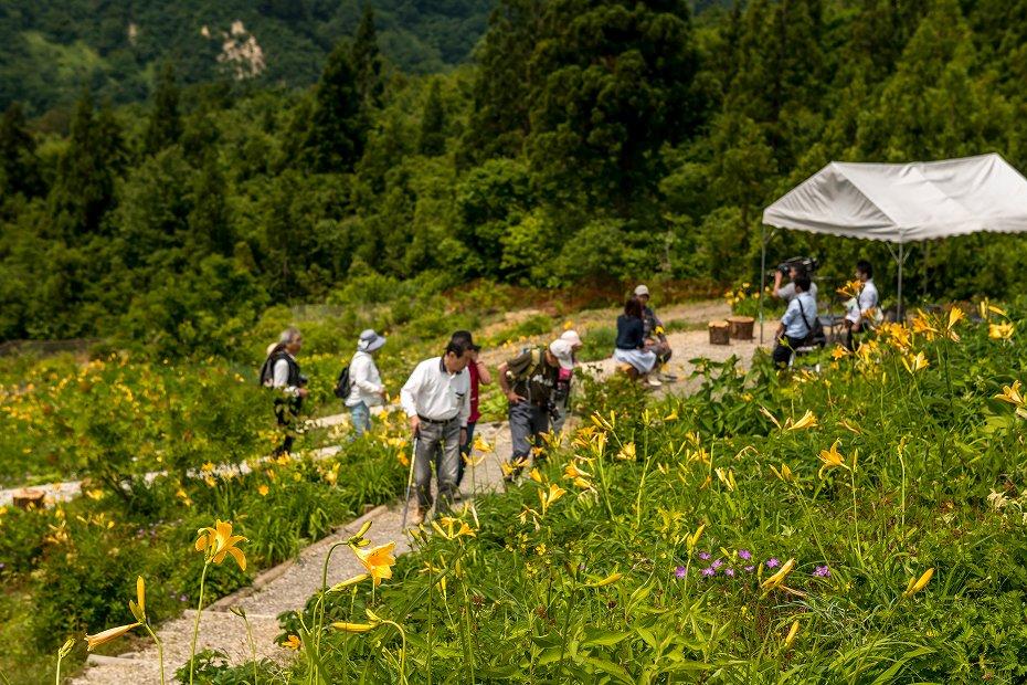 2016.06.06白山高山植物園の花9