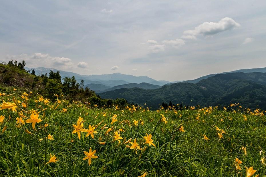 2016.06.06白山高山植物園の花1