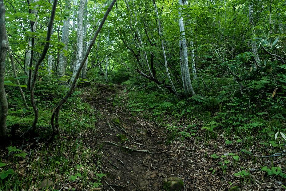2016.06.18登山口~3.5km地点4