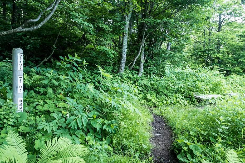 2016.06.18登山口~3.5km地点3
