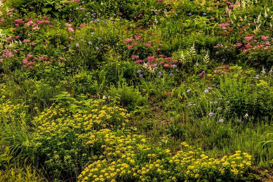 2016.06.24白山高山植物園1