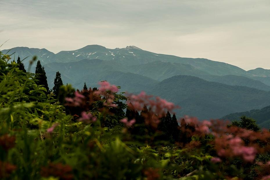 2016.06.24白山高山植物園3