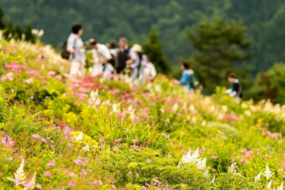 2016.06.24白山高山植物園2
