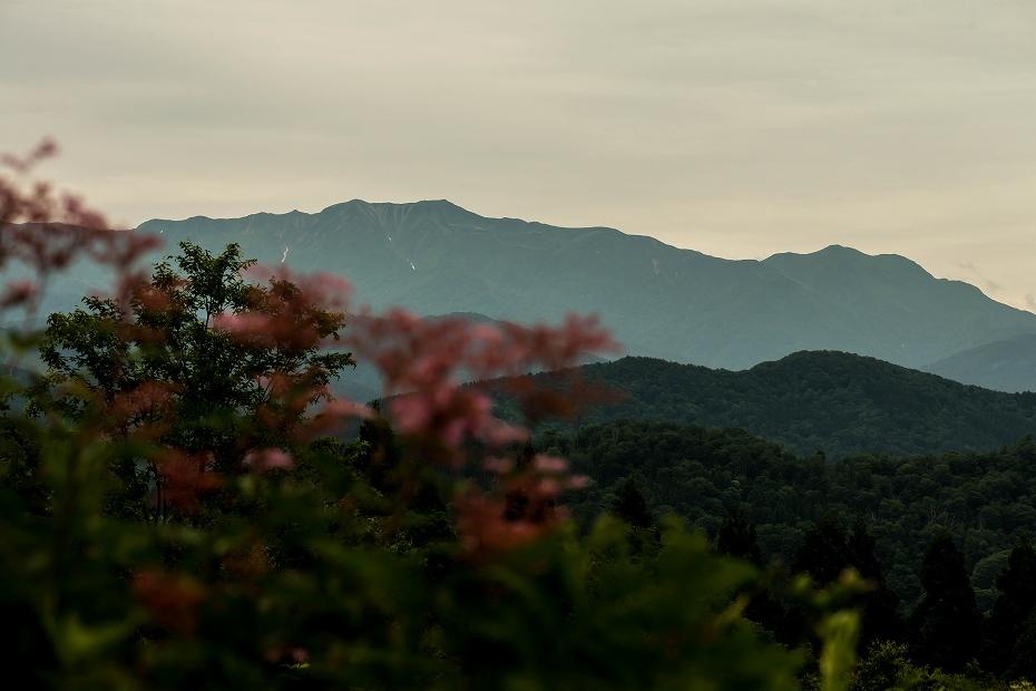 2016.06.24白山高山植物園28