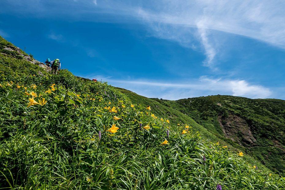2016.07.11観光新道を彩る花たち21