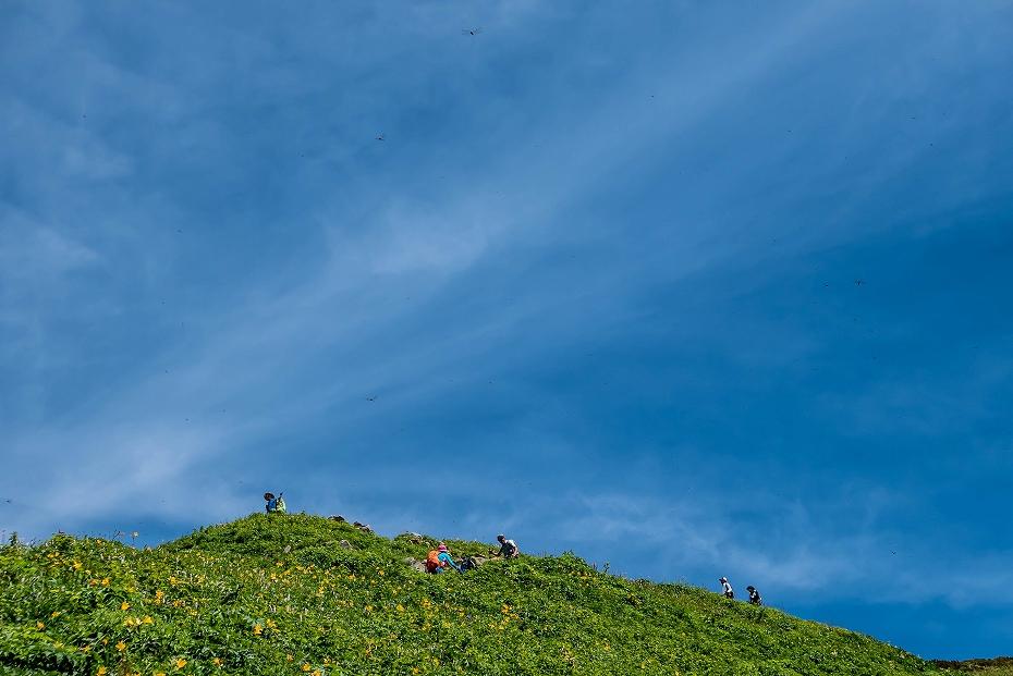 2016.07.11観光新道を彩る花たち19