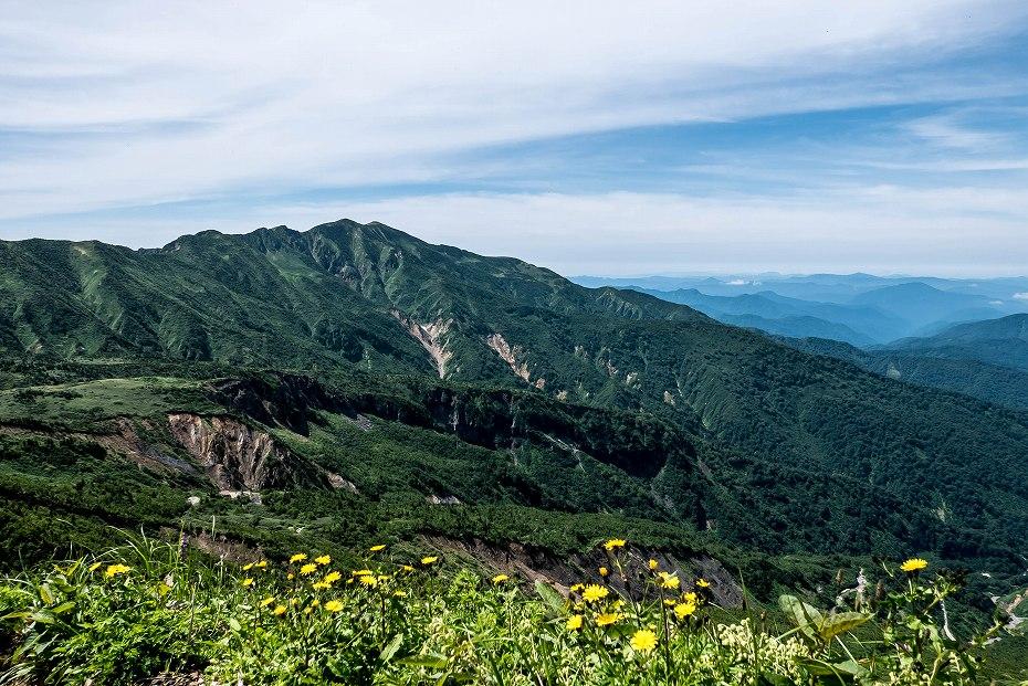 2016.07.11観光新道を彩る花たち18カンチュウゾリナ