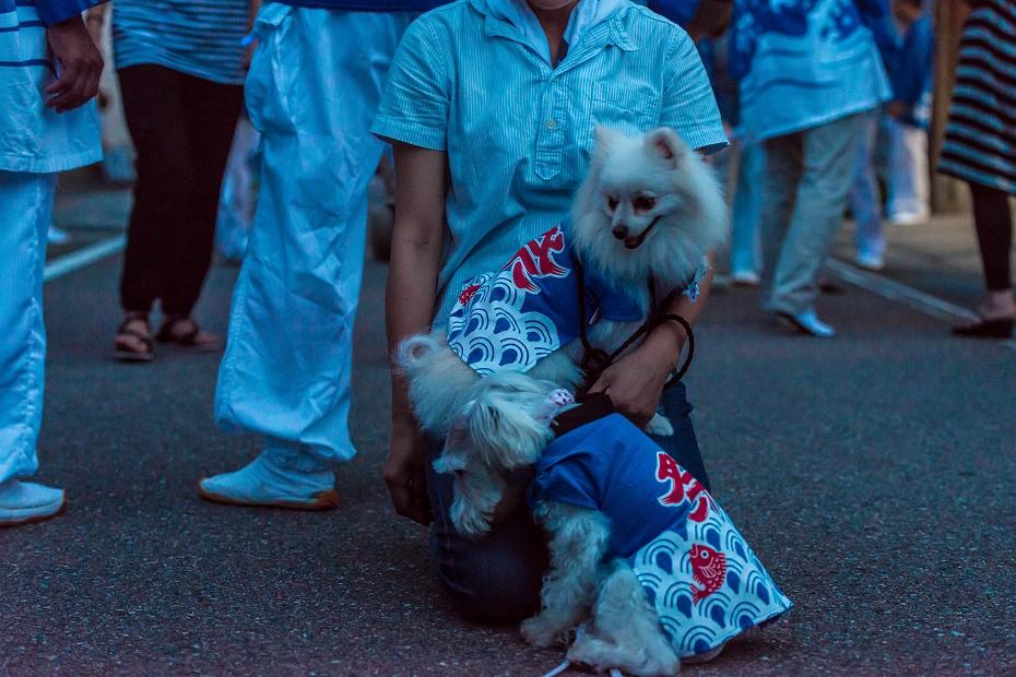2016.07.16剱地八幡神社大祭7
