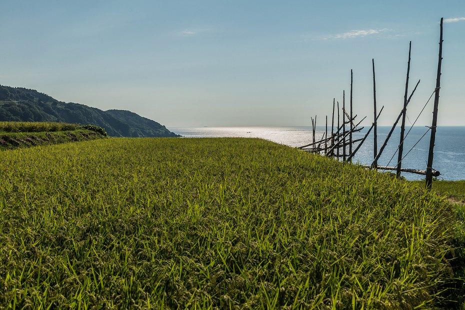 2016.08.25西保海岸の風景2