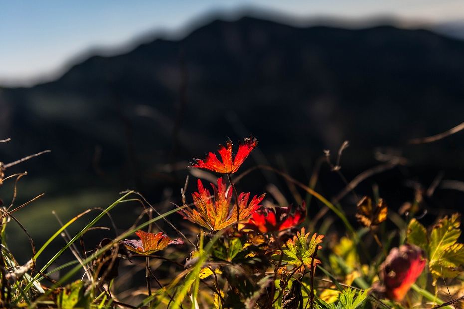 2016.10.07白山の紅葉12