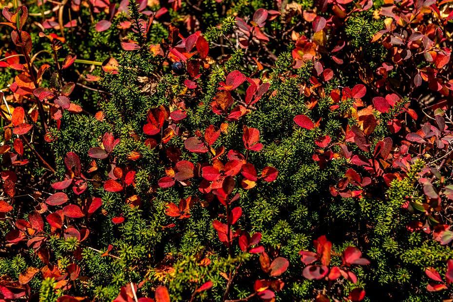 2016.10.07白山の紅葉26
