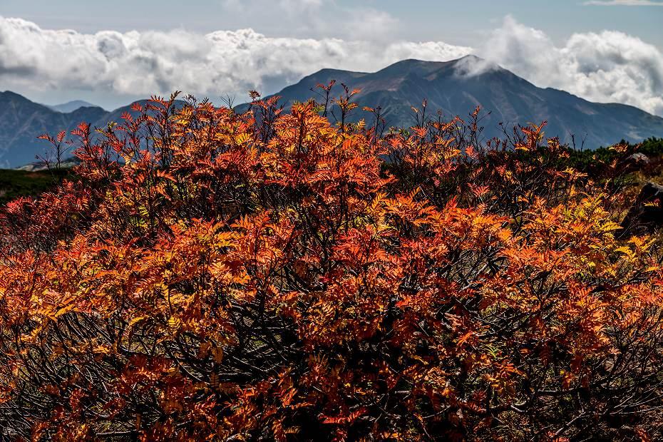 2016.10.07白山の紅葉27