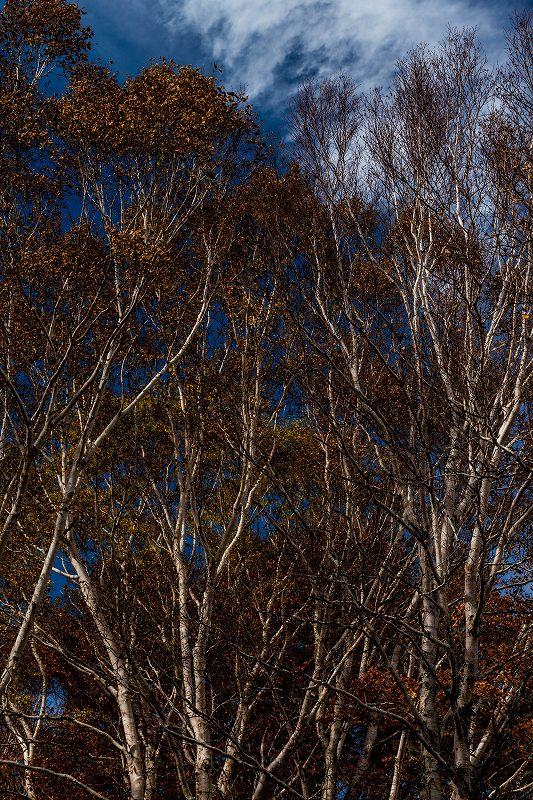 2016.10.22雲海と紅葉 磐梯山29