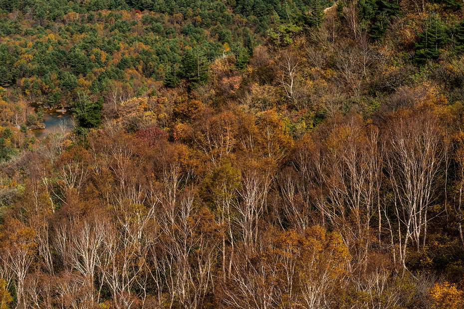 2016.10.22雲海と紅葉 磐梯山27