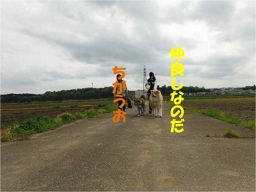 s-160501-6.jpg