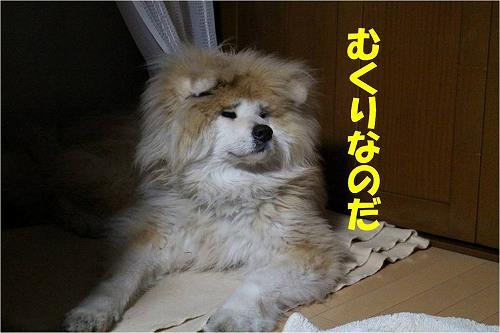 s-160531-6.jpg