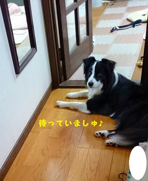 s-_20160422_200238.jpg