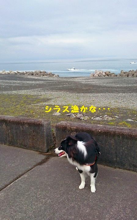 s-_20160620_114510.jpg
