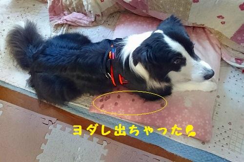 s-_20160620_193225.jpg