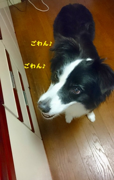 s-_20160708_191714.jpg