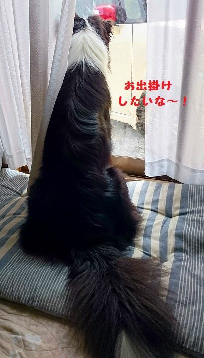 s-_20160806_191651.jpg