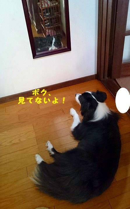 s-_20161007_191419.jpg