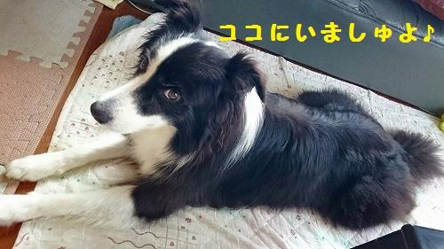 s-_20161009_183659.jpg
