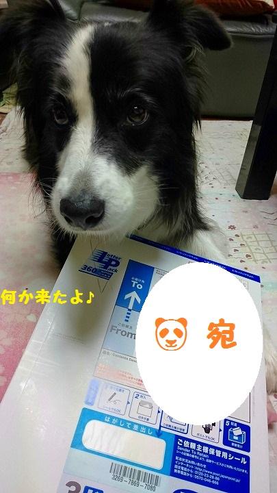 s-_20161024_184749.jpg